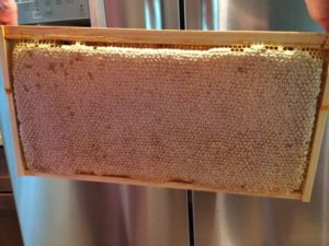 frame-of-honey-img_0903_0